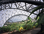 Eden Project, Bodelva, St Austell, Cornwall - Interior view of tropical biome biomorphic - 10212-50-1