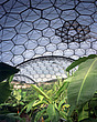 Eden Project, Bodelva, St Austell, Cornwall - Interior view of tropical biome - 10212-60-1
