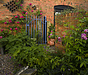 Garden, Lincolnshire with brick wall, blue iron gate, climbing roses and ferns - 12343-140-1