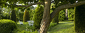 Trees, lawn and clipped bushes in garden, Lincolnshire - 12343-70-1