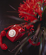 Contemporary Red Interior with Telephone and Flowers - 10726-30-1