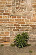 Weeds growing at  brick wall, detail - 32024-130-1