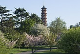 View of Pagoda, Kew Gardens, Kew,  London - 12656-630-1
