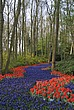 Flowers at Keukenhof Gardens, near Leiden - 12679-10-1