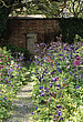 Aquilegia border and a false door and frame against a wall - 12782-150-1