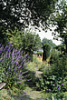 A corner of the kitchen garden at Bryan's Ground, Stapleton (Nr - 12782-60-1