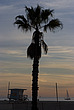 Palm tree at Sunset, Santa Monica beach - 12983-1000-1
