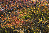 Autumn leaves in Battersea Park - 12983-110-1