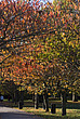 Autumn Trees in Battersea Park - 12983-120-1