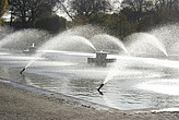 Water fountains in Battersea Park  - 12983-150-1