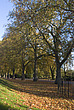 Autumn trees in Battersea Park - 12983-210-1