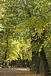 Autumn trees in Hampstead Heath  - 12983-360-1