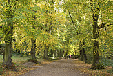 Autumn trees in Hampstead Heath  - 12983-370-1