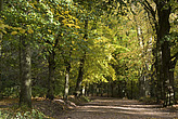 Autumn trees in Hampstead Heath - 12983-380-1