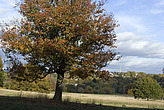 Hampstead Heath - 12983-420-1