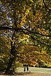 Autumn trees in Hampstead Heath  - 12983-430-1