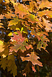 Autumn leaves in Hampstead Heath - 12983-440-1