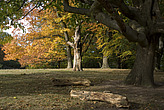 Autumn trees in Hampstead Heath - 12983-450-1