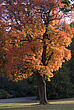 Autumn trees, Royal Botanical Gardens at Kew - 12983-530-1
