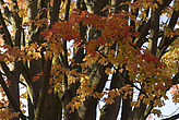 Autumn trees, Royal Botanical Gardens at Kew - 12983-540-1
