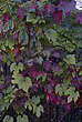 Autumn leaves, Royal Botanical Gardens at Kew - 12983-570-1