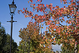 Autumn colours, Maida Vale - 12983-780-1
