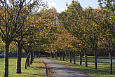 Autumn leaves in Battersea Park - 12983-90-1