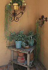 Pot plants and table  - 12513-180-1