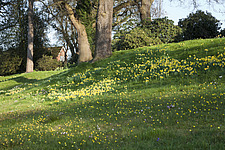 Spring flowers in dappled sunlight at RHS Wisley, Surrey, UK - 13339-150-1