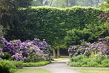 Baroque park with tall hedge and rhododendron bushes, Franzosischer Garden, Dusseldorf, Germany - 40085-160-1