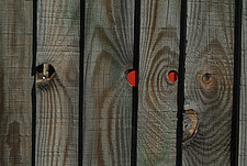 Close up of a close-boarded fence with knot holes - 10639-170-1