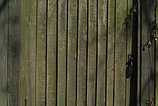 Close up of a close-boarded fence and gate with metal latch - 10639-190-1