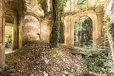 an abandoned villa that is in ruins where a tree is taking over the main room - ARC101498