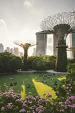Sunset at the Supertrees at Gardens by the Bay, Singapore, with Marina Bay Sands in the background - ARC108684