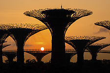 Sunrise at The Supertrees at Gardens by The Bay, Singapore, designed by Wilkinson Eyre - ARC108763